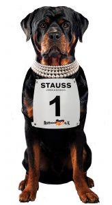 Stauss Rottweiler Miniolympiade