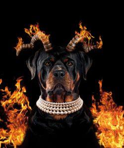 Stauss Rottweiler Teufel